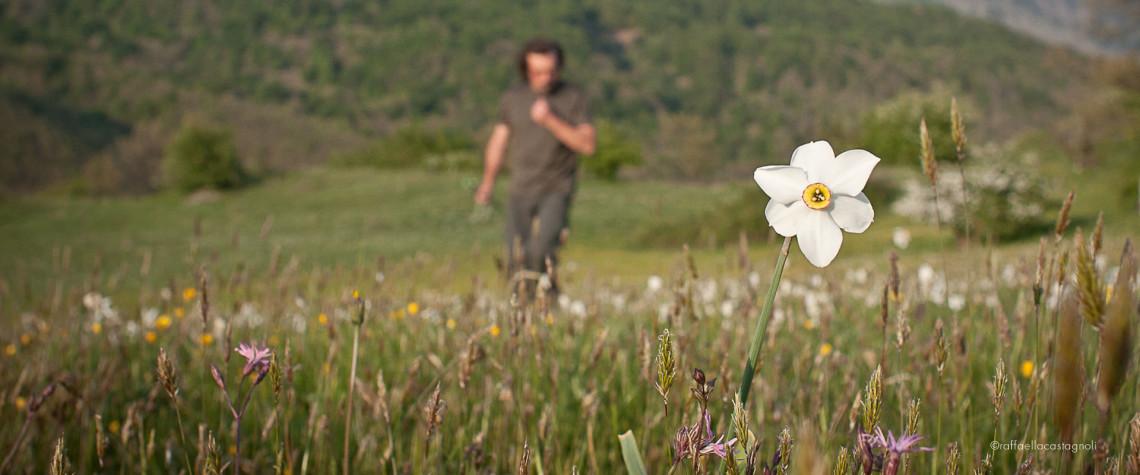 giunchiglia in fiore